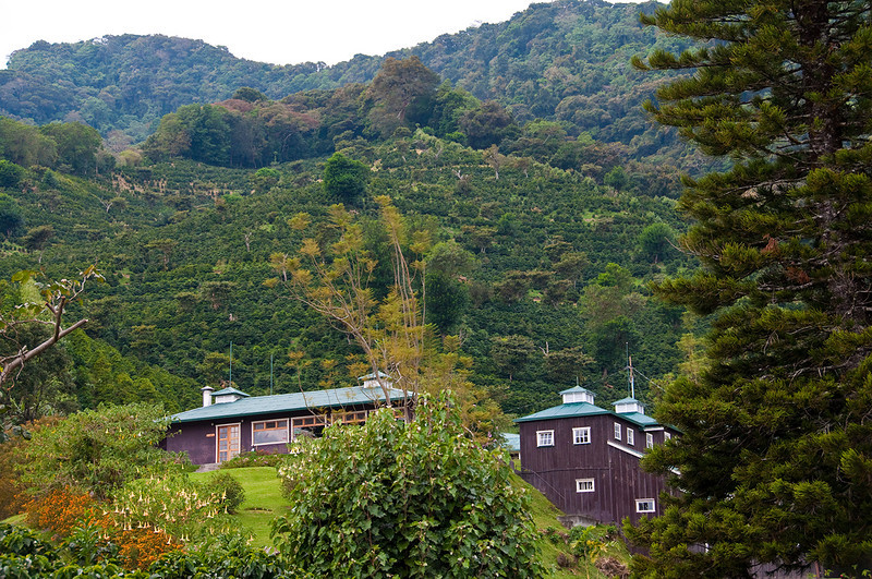 The Lerida coffee farm and Eco Lodge.  Lerida is a world class destination for bird lovers. The quetzal and other rare birds are found in the forest above the coffee fields.