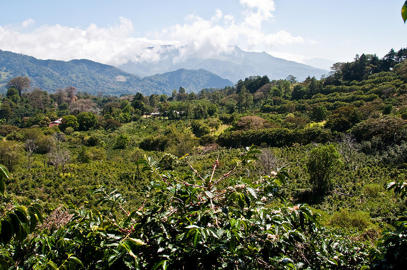 The beautiful Elida farm. IT has placed in the top ten coffee in the Best of Panama competition in 2009 and 2008.