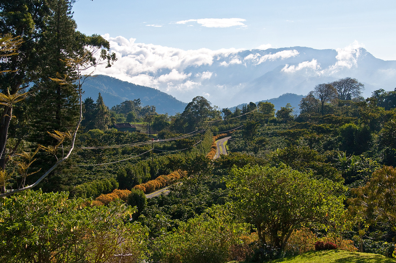 Looking due east from Lerida.  La Esmeralda's Gesha coffee is grown on the mountain slopes in the distance, partially covered with mist and a few clouds.<br /> Lerida gets about 110 - 120 inches of rain per year while La Esmeralda gets 138 - 157 inches, according to John.  It rains less at La Esmeralda during the harvest season, however.  It is extraordinary how many microclimates there are in the Boquete area.