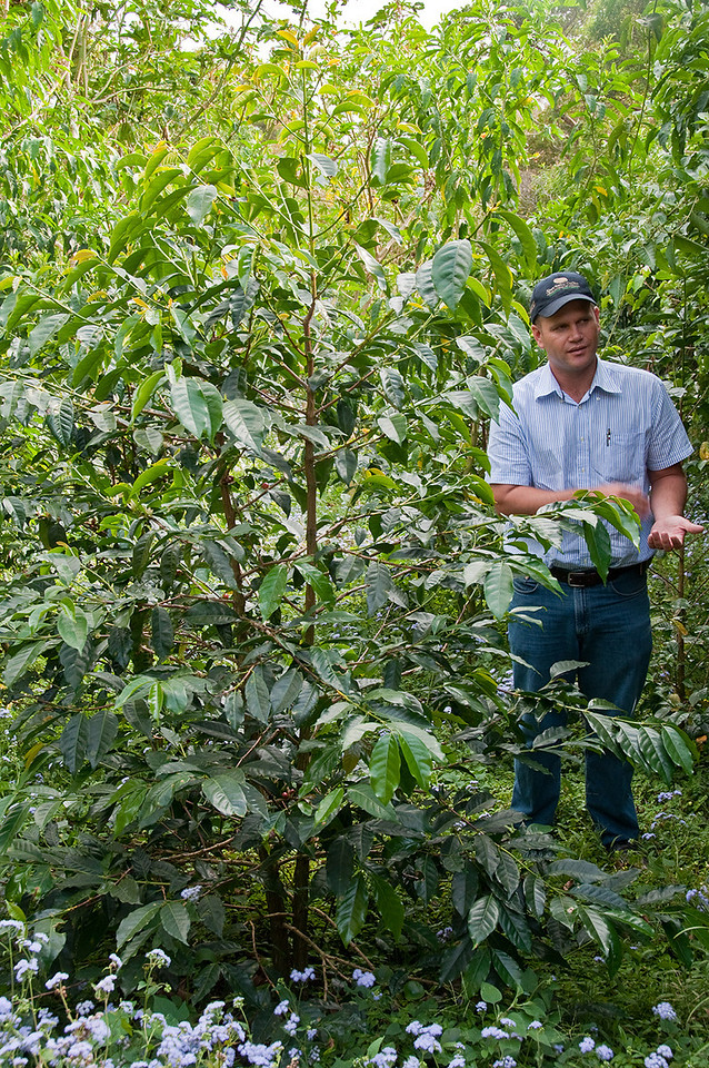 We next visited Hacienda La Esmeralda and Daniel Peterson gave us a tour. He is standing next to a Gesha coffee tree.