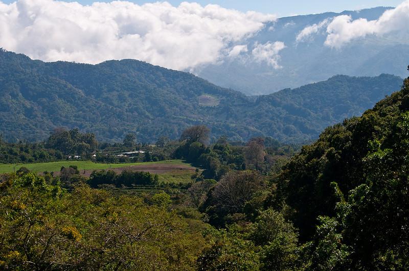 One last view from Finca Elida.  Looking north towards the Mario plot of La Esmeralda....