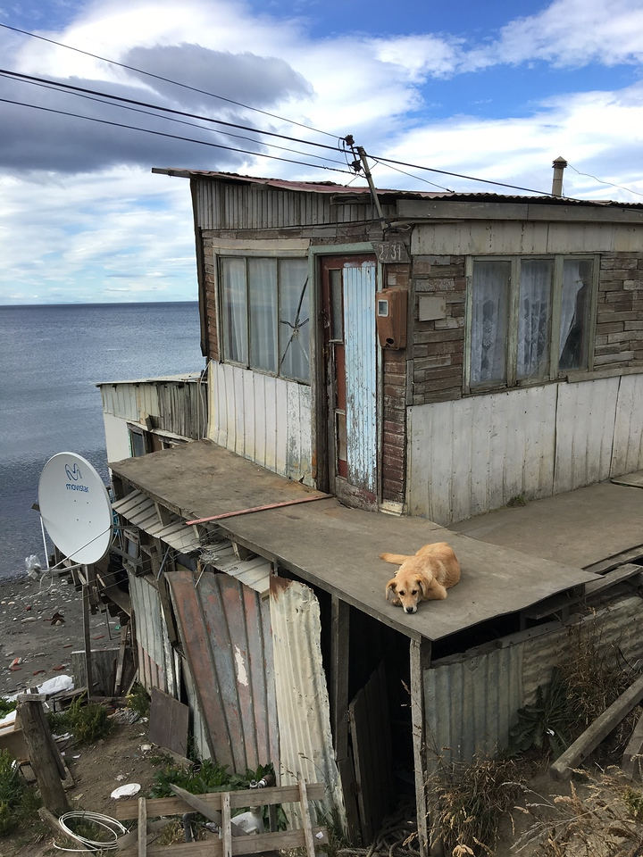 Cute dog on the Strait of Magellan, Chile.