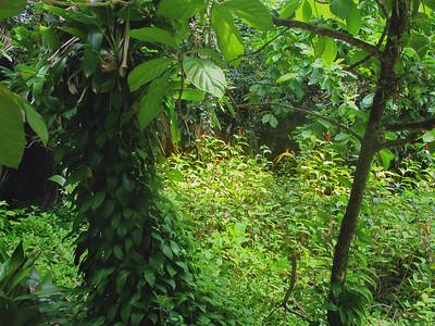 Jungle Glen