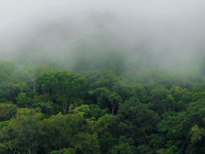 Selva Boquete