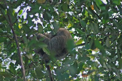 Slumbering Sloth
