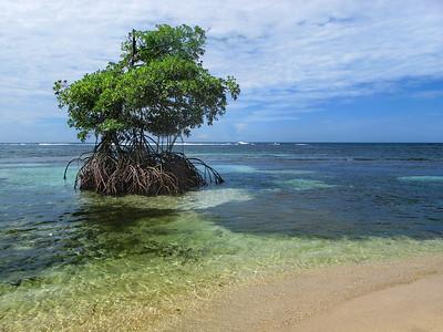 Mangrove Islet