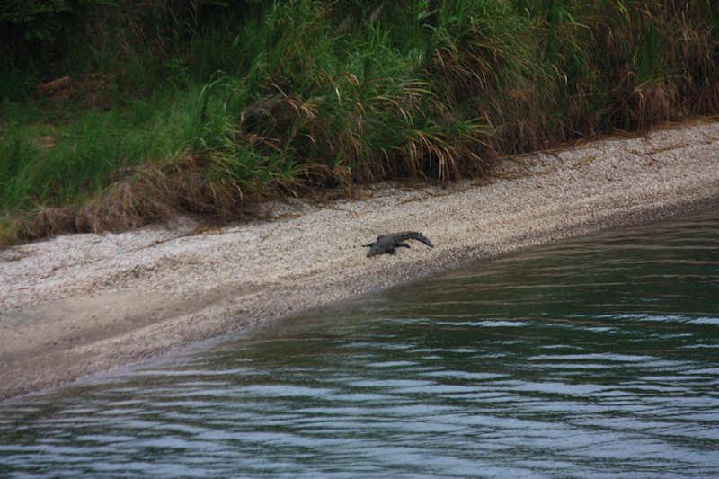 a crock hanging out near Gatun Locks