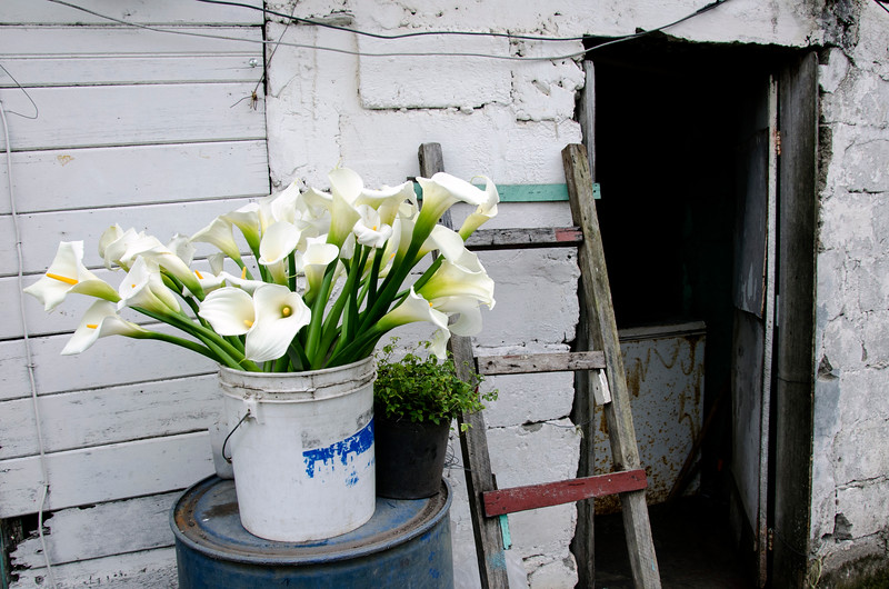 liliesinabucket.jpg
