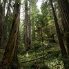 Redwood NP , California