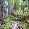No intro needed , the oldest living things on earth ...giant redwoods