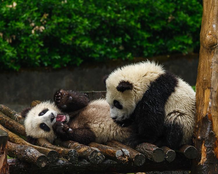Wolong Panda Station