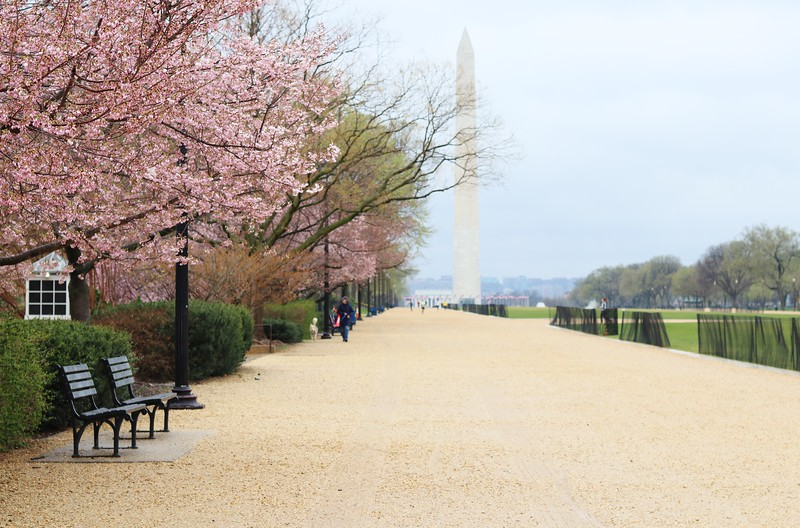 Washington Monument March 15 2020