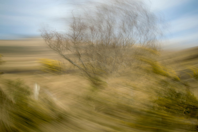 Ireland: Tree in Motion II