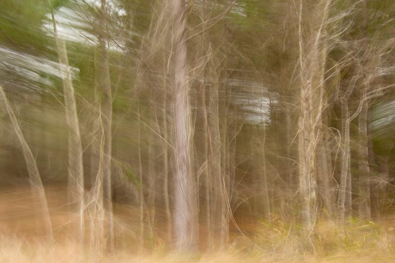 Savannah Forest I