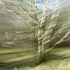 Ireland: Tree in Motion I