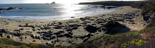 Elephant Seal Beach, Central CA Coast