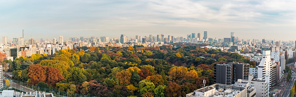 Skyline with Shinjuku Gyoen