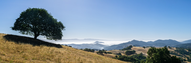 SOLITARY OAK | CALIFORNIA