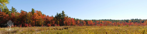 Panorama of Swamp Road in Sharon, NH
