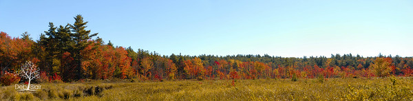 Swamp Road in Sharon, NH during peak foliage.