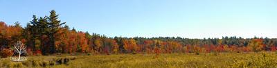 Swamp Road in Sharon, NH during peak foliage.