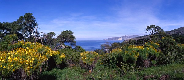 California, Channel Islands National Park, Santa Cruz Island, Prisoners Harbor Trail