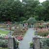 Rockefeller Rose Gardens, Botanical Gardens, Bronx, NY