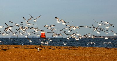 Sandy Point Lighthouse and Seagulls