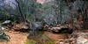 Upper Emerald Pool - Zion NP