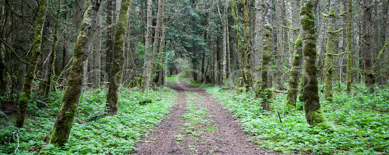 """Forest Drive"" - Olympic Peninsula, Washington"