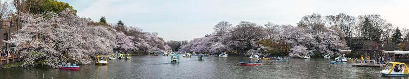 Inokashira Park in spring