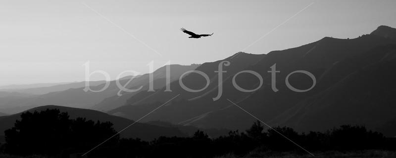 © Bellofoto