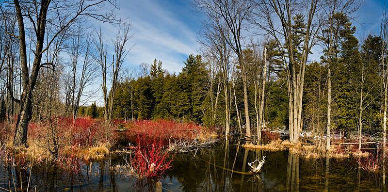 Spring Pond