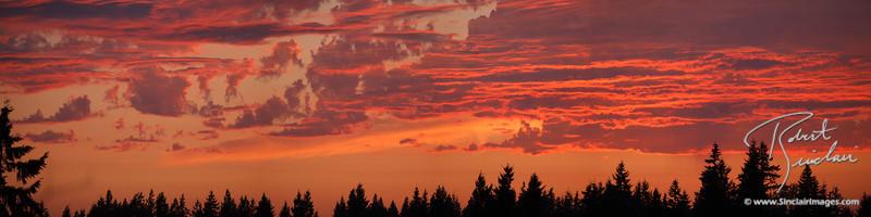 Intricate Pink & Orange at Sunset