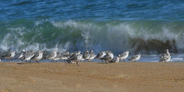 Birds 0183