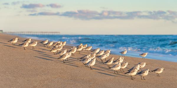 Birds 5204