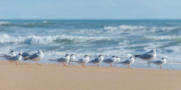 Birds 4166