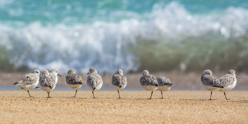 Birds 4636 pano