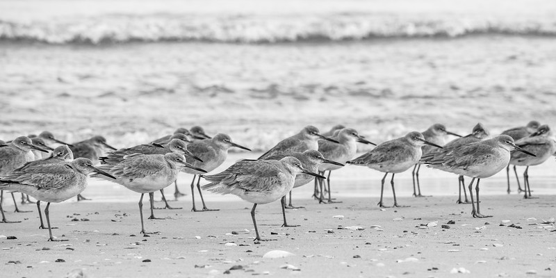 Willets 172