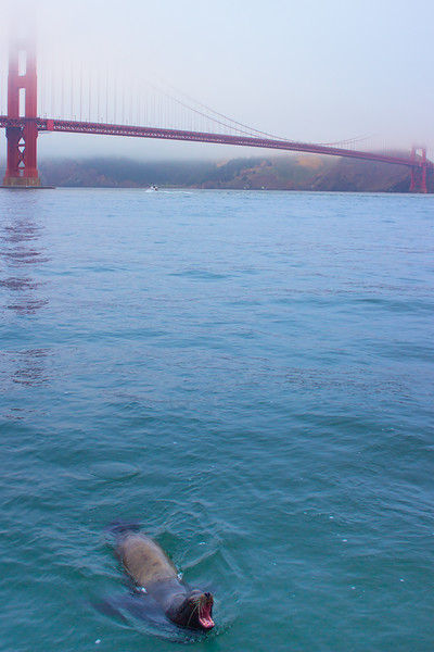 Golden Gate Guardian