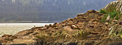 sea lions pan