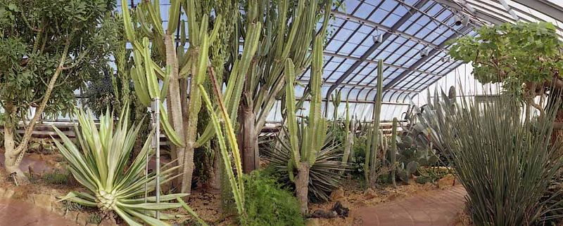 Cactus Garden, Birmingham Botanical Garden