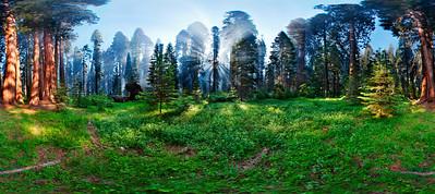 Smokey Giant Forest #2