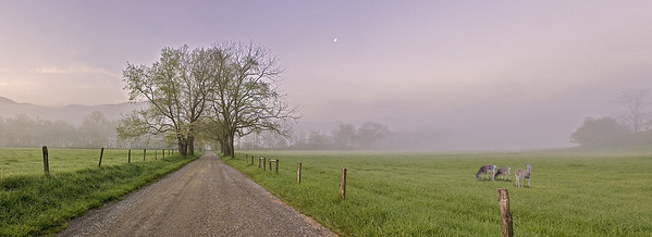 Dirt road and trees with deer and moon overhead. panorama Smoky Mountains