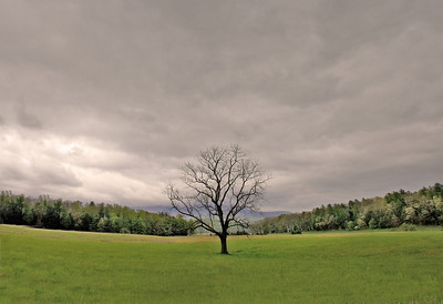 Lone tree_two image composite panorama Smoky Mountains