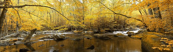 tremont fall canopy panorama Smoky Mountains