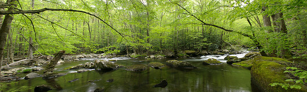 tremont spring canopy panorama Smoky mountains