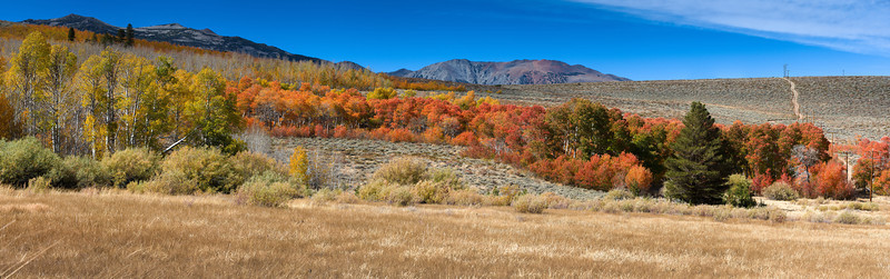 Sierra Autumn<br /> Mono County, California<br /> (Stitched Panorama)