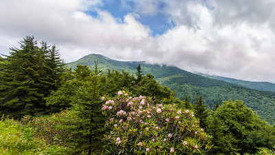 Mount Mitchell and Rhododendron