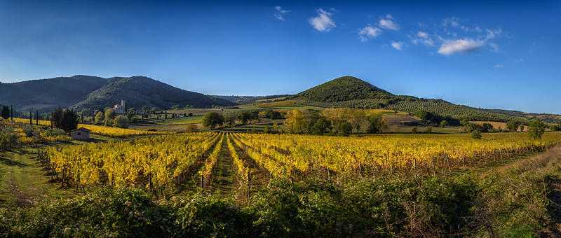 Vineyard in Tuscany in the fall, Italy